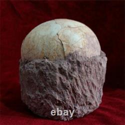 Segnosaur Dinosaur Egg Fossilized Crystallized Fossil Jurassic Cretaceous World